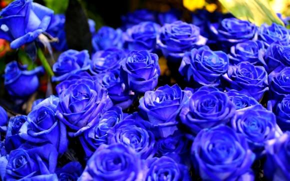 Rosas-clonicas