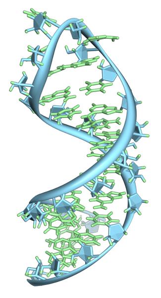 ARN (una sola hebra)