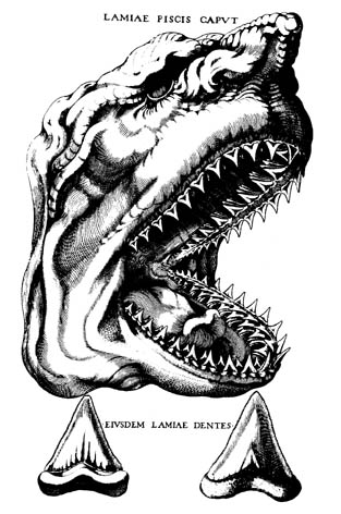 Breve historia de la cristalografía: (II) Las rocas con lengua y la orina de Hooke