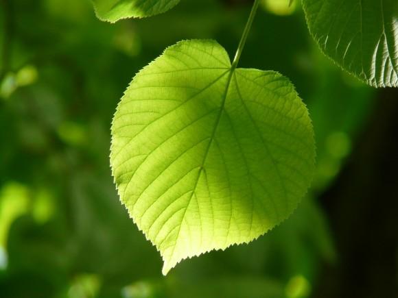 #De la fotosíntesis